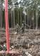 Galeria Sadzenie lasu 2016