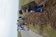 Galeria Sadzenie alei czereśniowej w Strzeleczkach